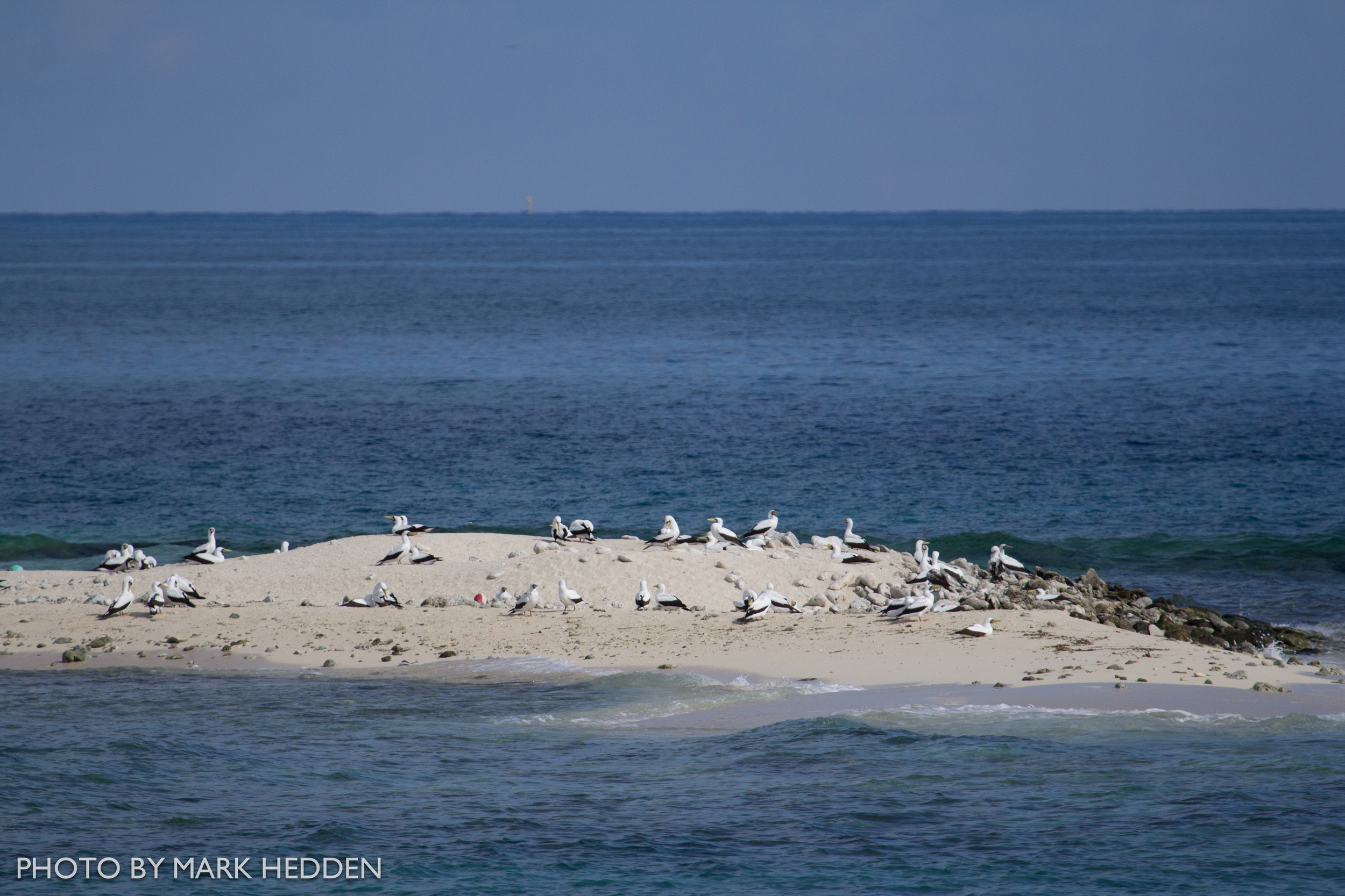 The Masked Booby colony on Hospital Key.