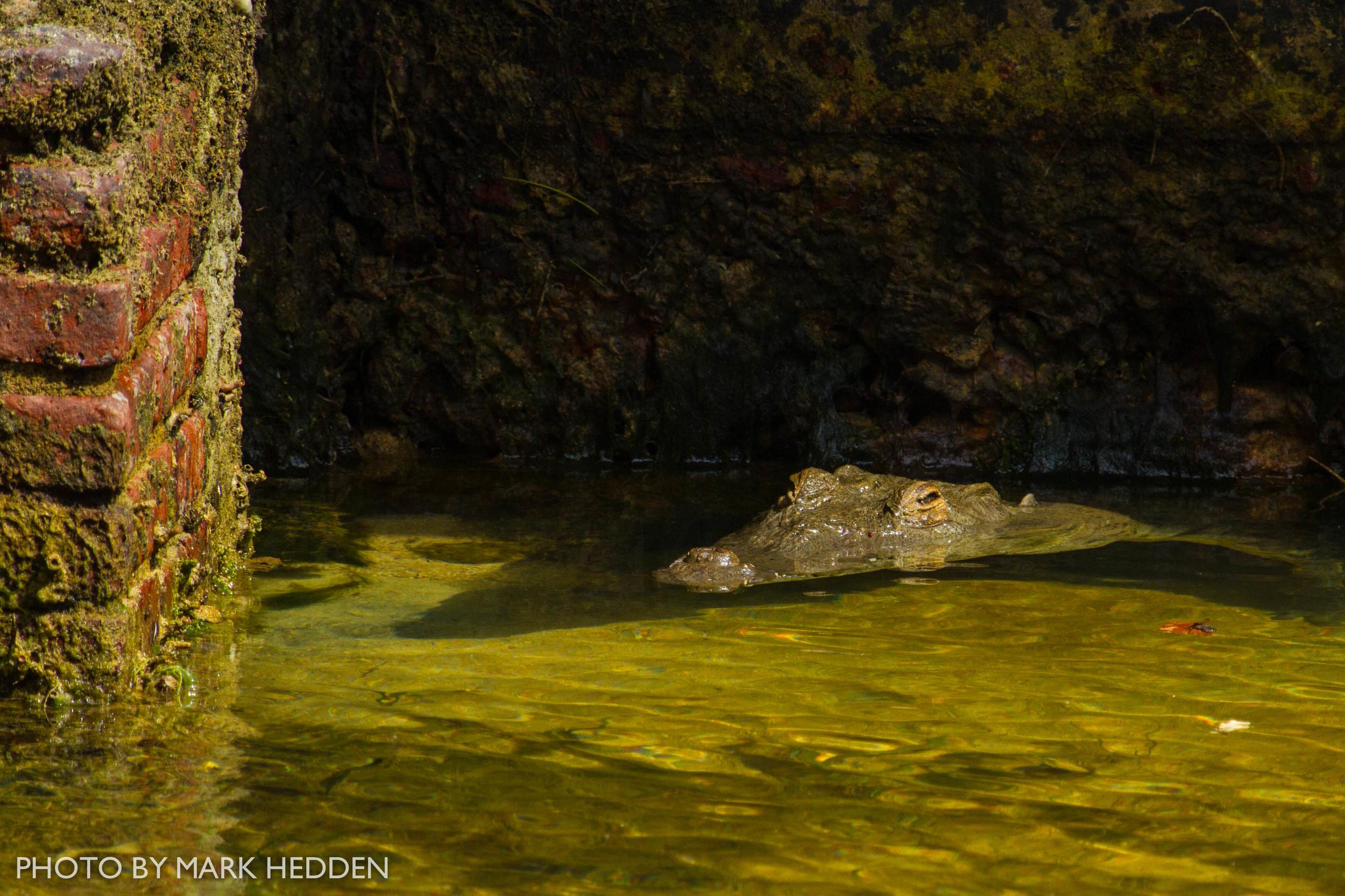 Croc (13 of 16)
