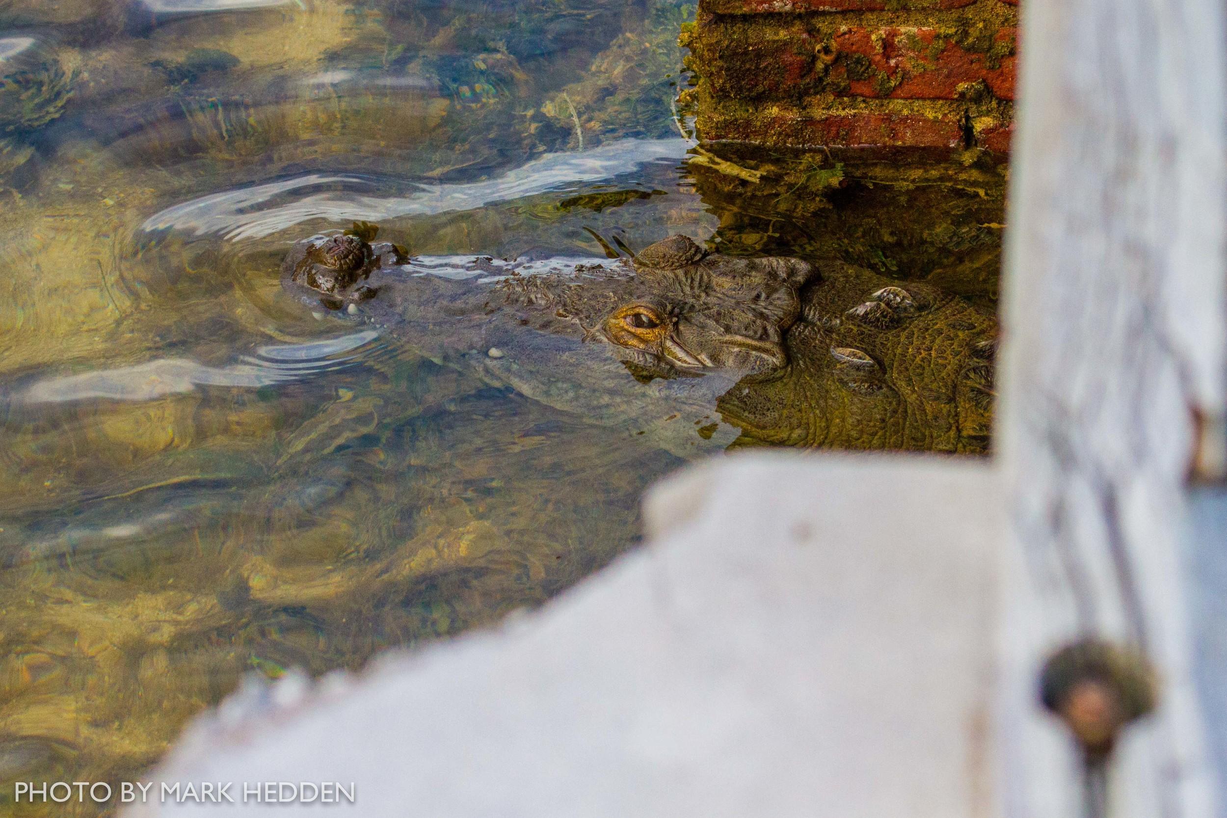 Croc (15 of 16)