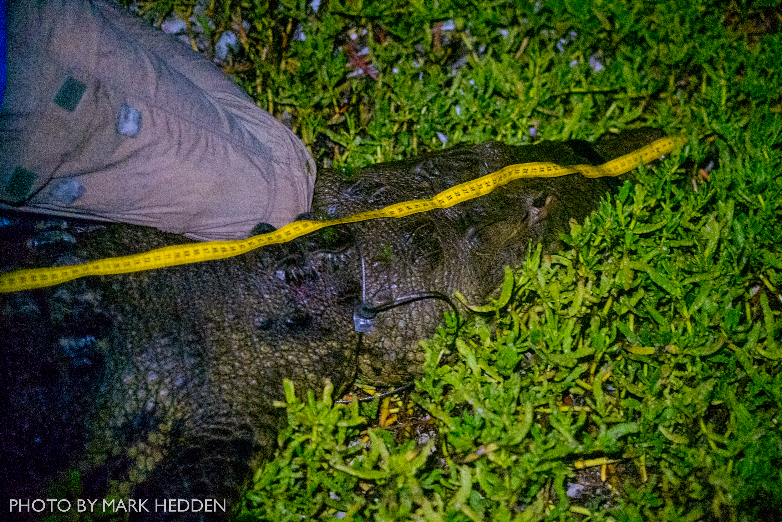 Croc (4 of 7)
