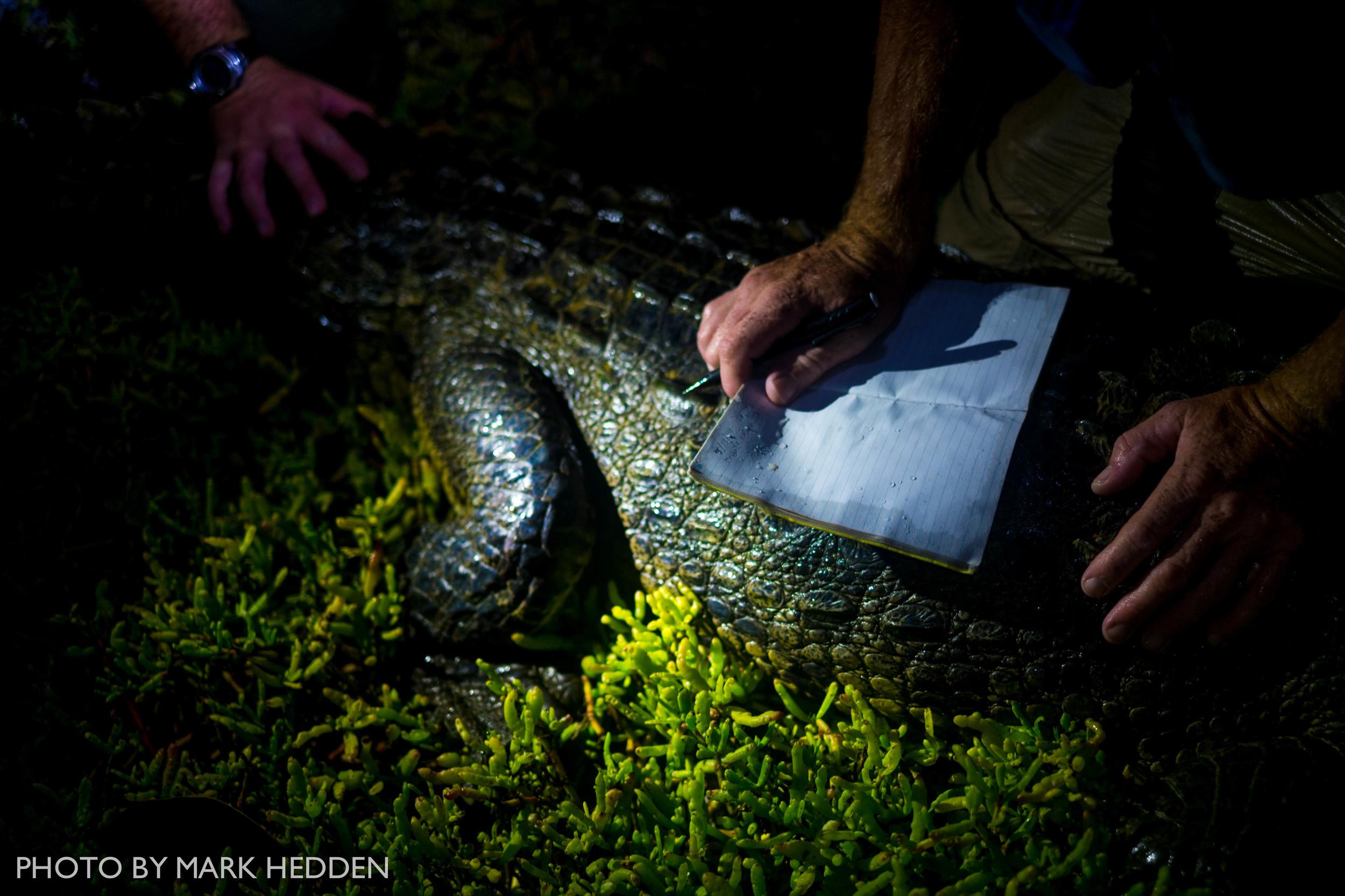 Croc (8 of 16)