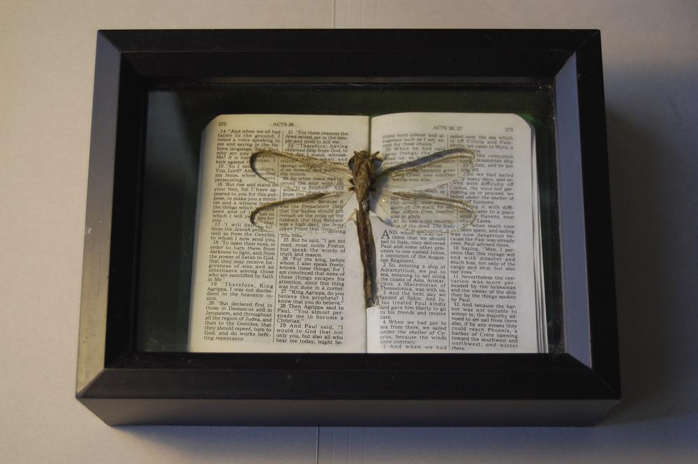 dragonfly_bible.JPG