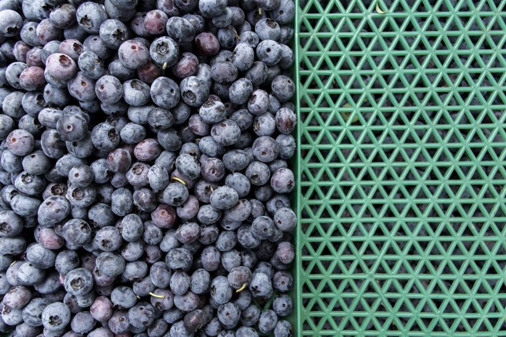 Web-Blueberries-8687.jpg