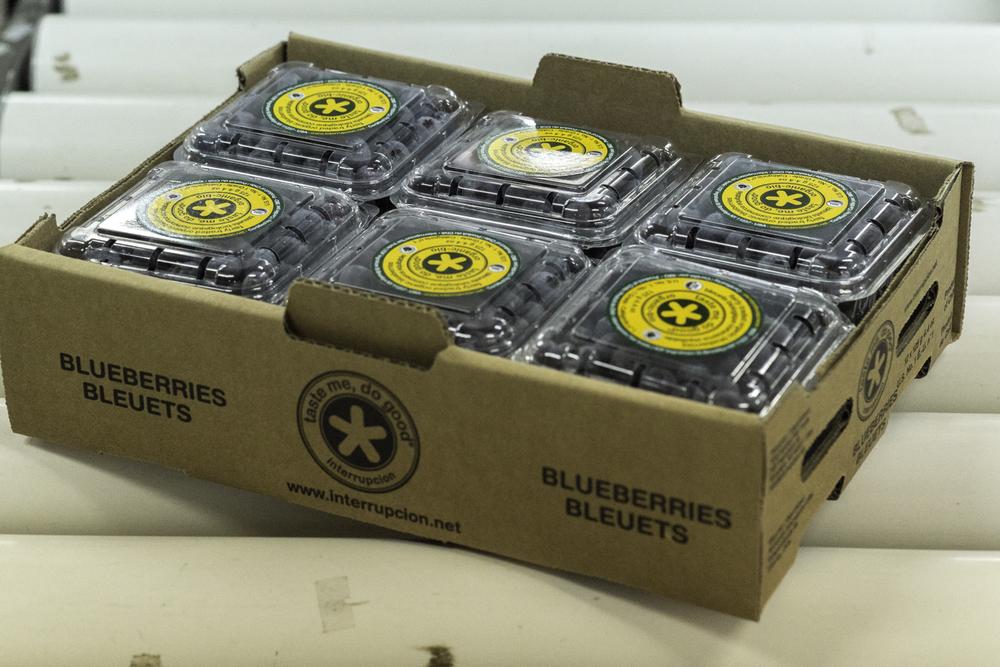 Web-Blueberries-8881.jpg