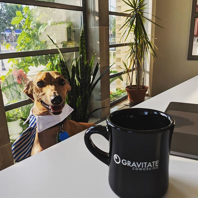 @mini.oscar.mayer.wiener is all business for #internationalcoworkingday at our #valleyjunction location. Meet him and stop by to see what #coworking is all about! #coworkers #cowork #gravitate #coworkingspace #coworkersbelike #dsm #dsmusa #iowa #ia365 #startup #startuplife #entrepreneur #desmoines #coworkinglife #coworkingoffice #office #remotework #remoteworking #freelance #freelancer #freelancing #collaboration #wdm #workdog