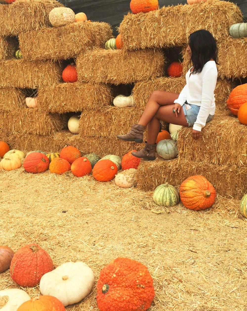 Pumpkin 4557.JPG