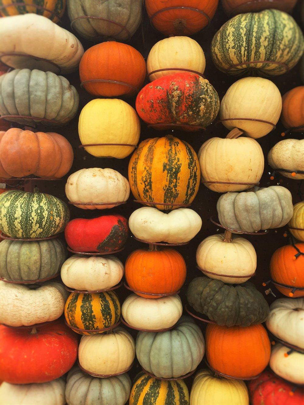 Pumpkin 4596.JPG