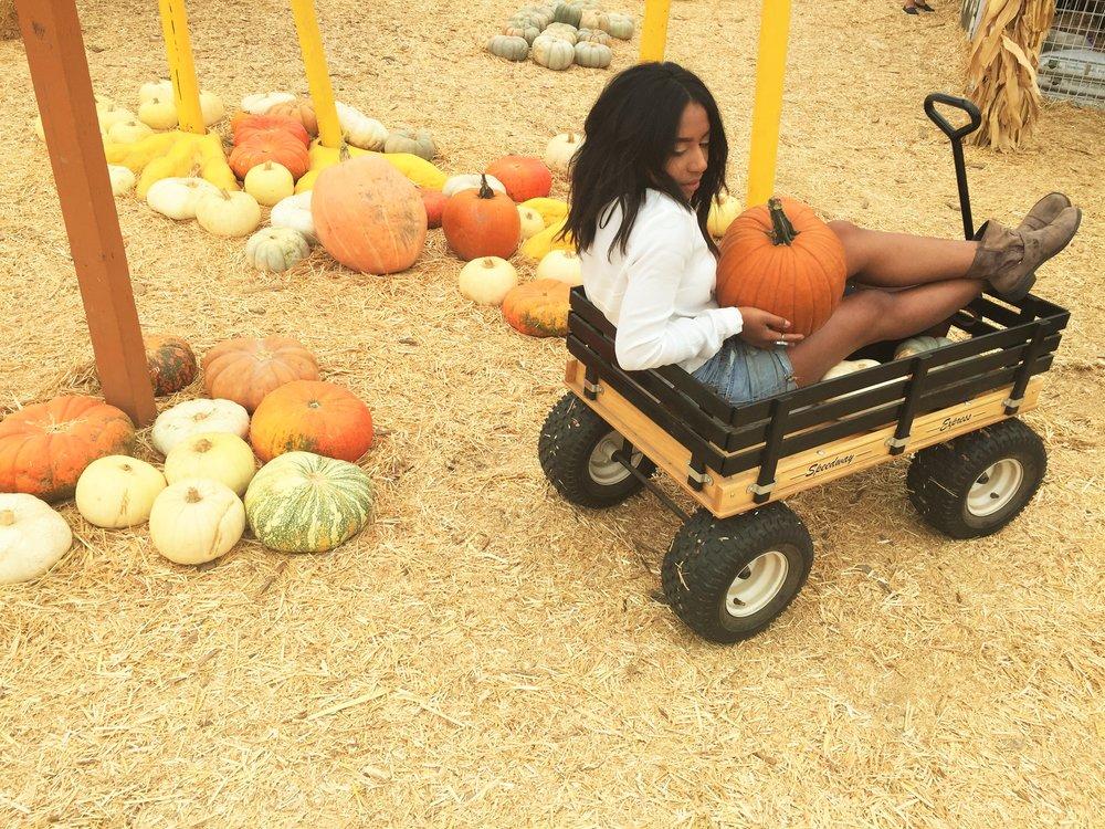 Pumpkin 4619.JPG