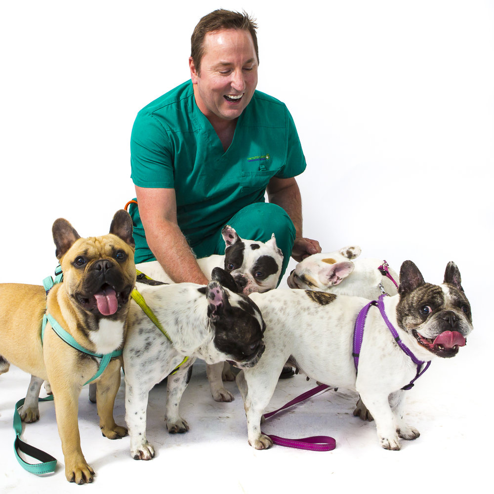 Cameron Rain lead Veterinarian at Hampton Park Vets getting down with the Frenchies.