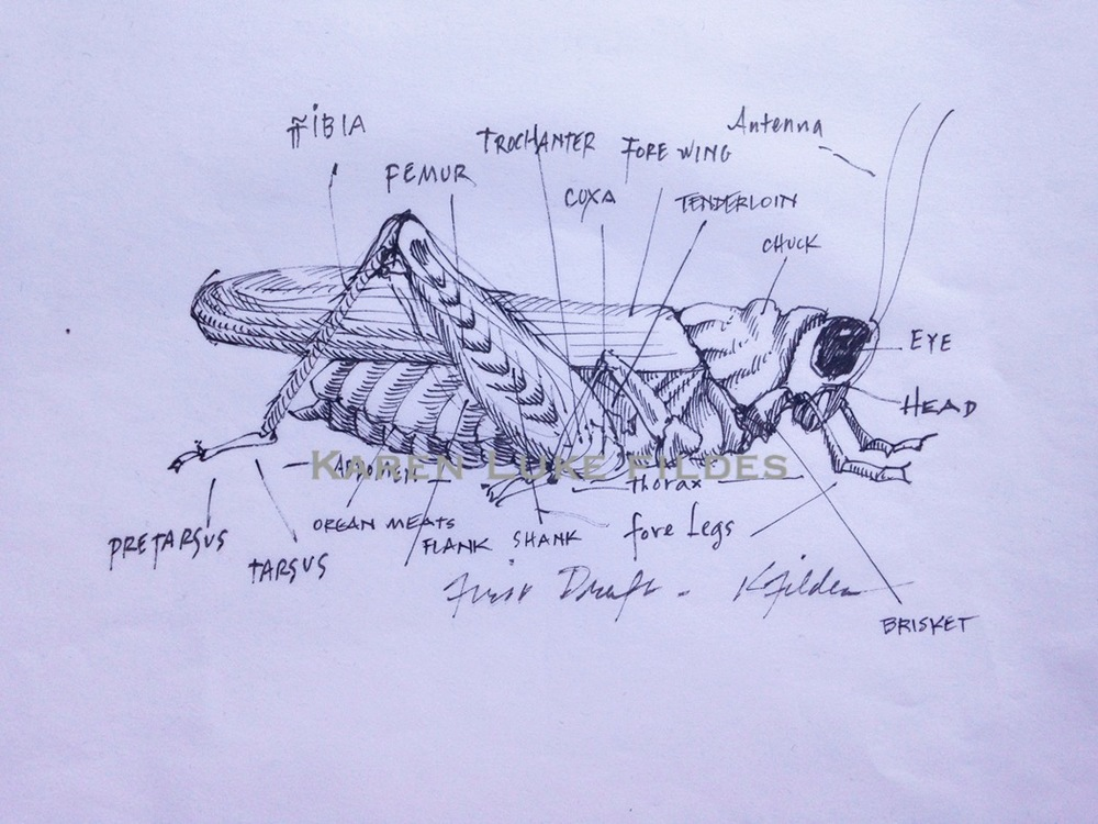 Grasshopper Anatomy First Draft 50.jpg
