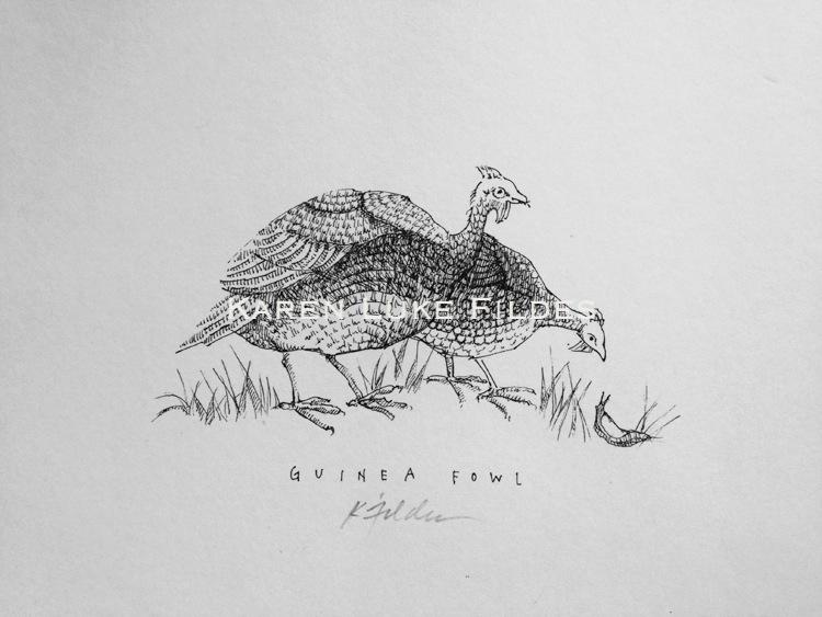 Guinea Fowl original 80.jpg