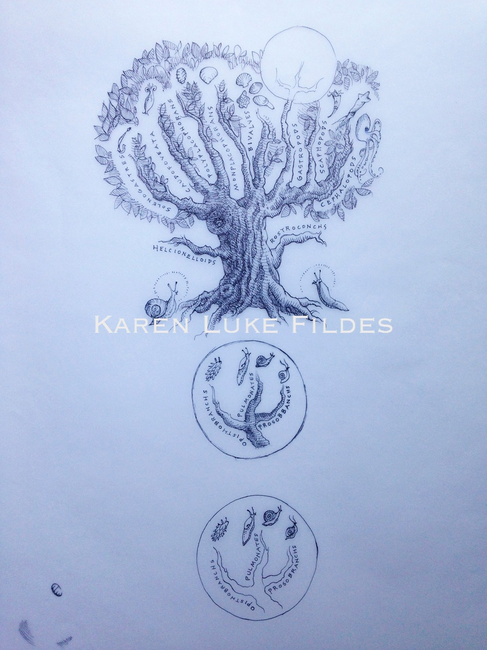 Mollusk Family Tree Original Sketch $120 .jpg