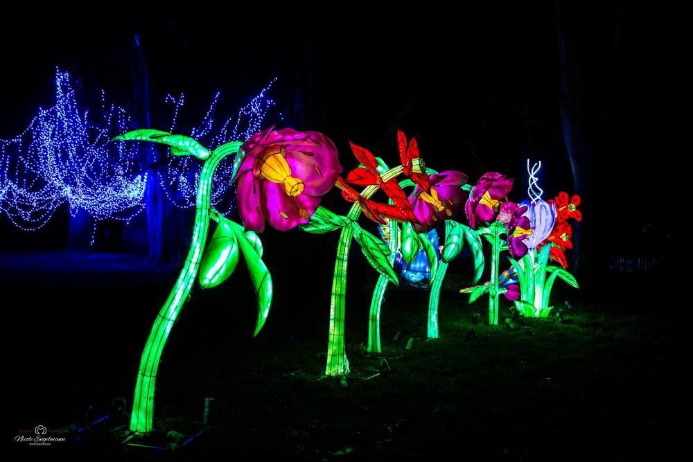 lantern-festival-16.jpg