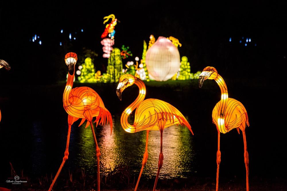 lantern-festival-24.jpg