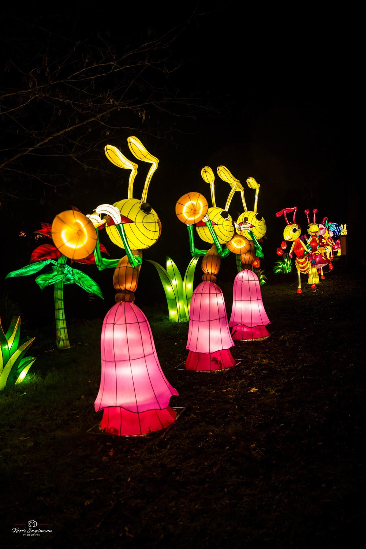 lantern-festival-29.jpg