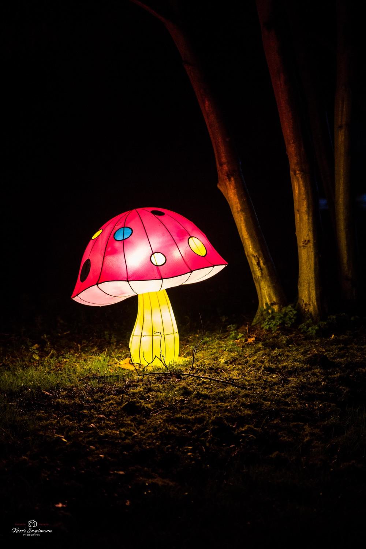 lantern-festival-32.jpg