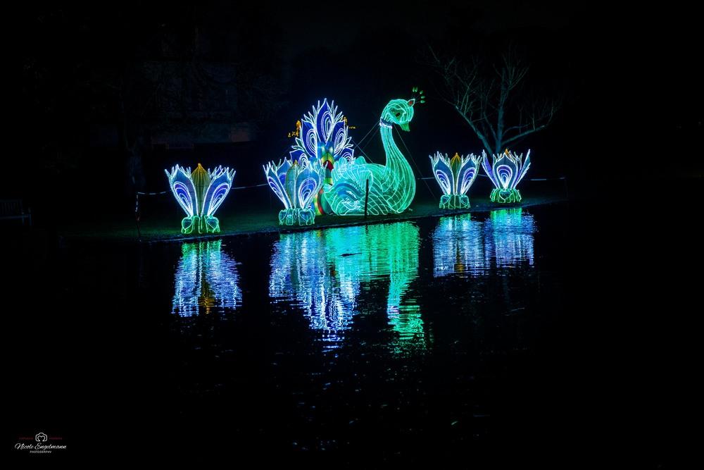 lantern-festival-34.jpg