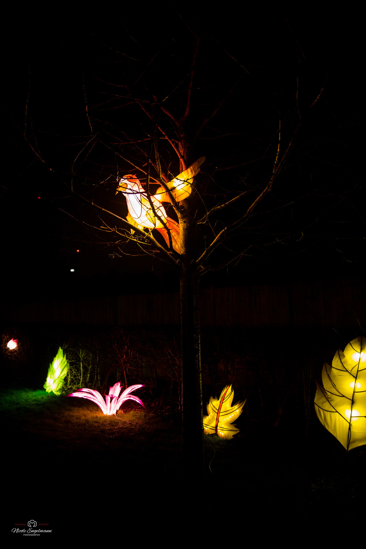 lantern-festival-83.jpg