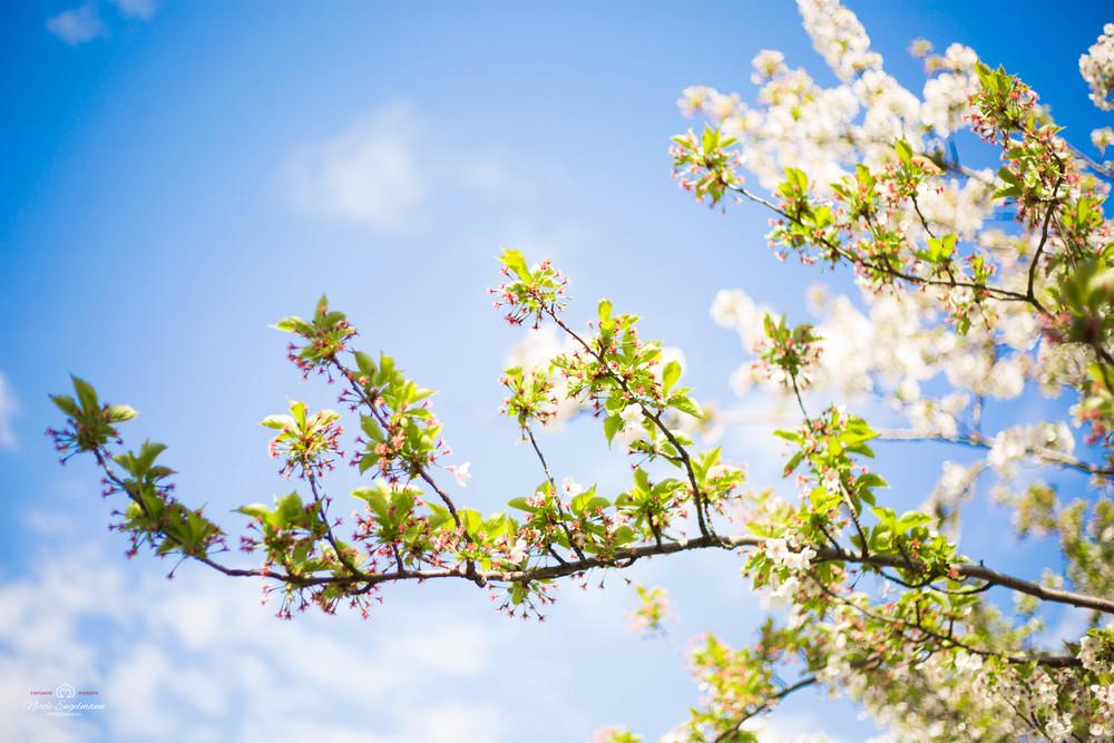 Spring Flowers-1.jpg