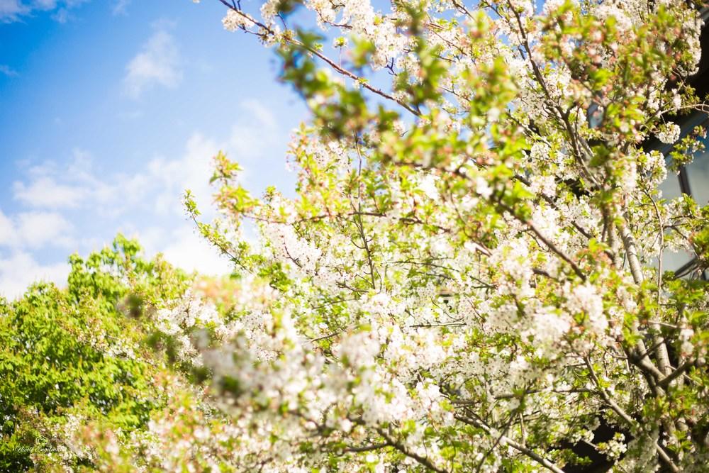 Spring Flowers-6.jpg