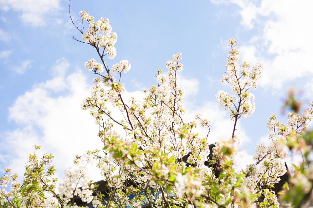 Spring Flowers-7.jpg