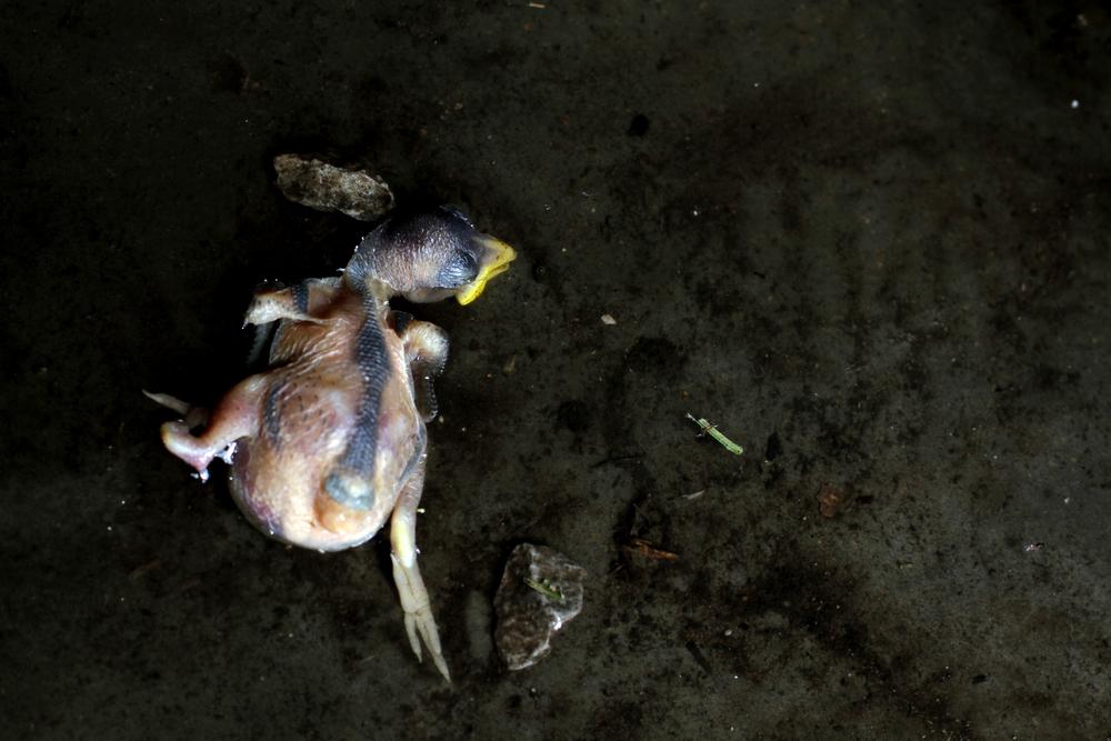 houser_babybird.jpg
