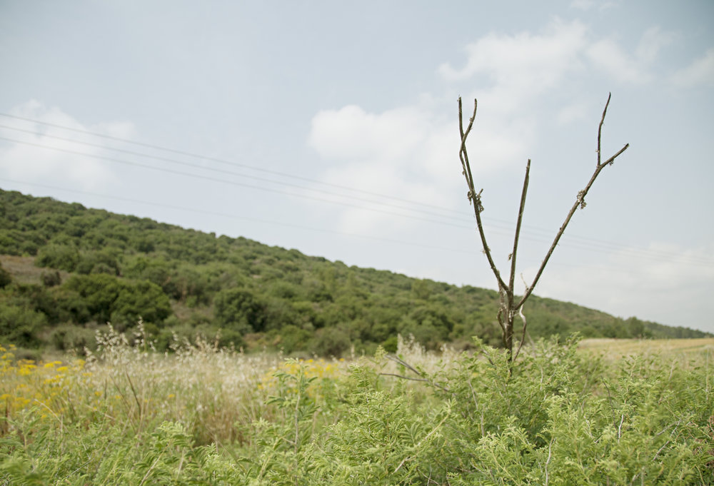 Hanged, Valley of Elah, May 2013