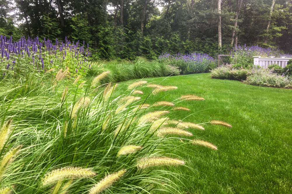 ornamental-grasses_nepeta_garden-landscape-design_long-island_li_ny_reputable-reliable-honest-company.jpg
