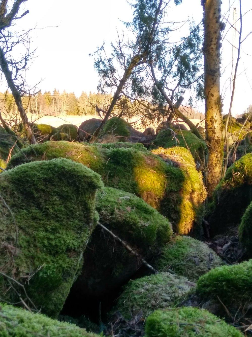 På tur i egen trollskog ;)