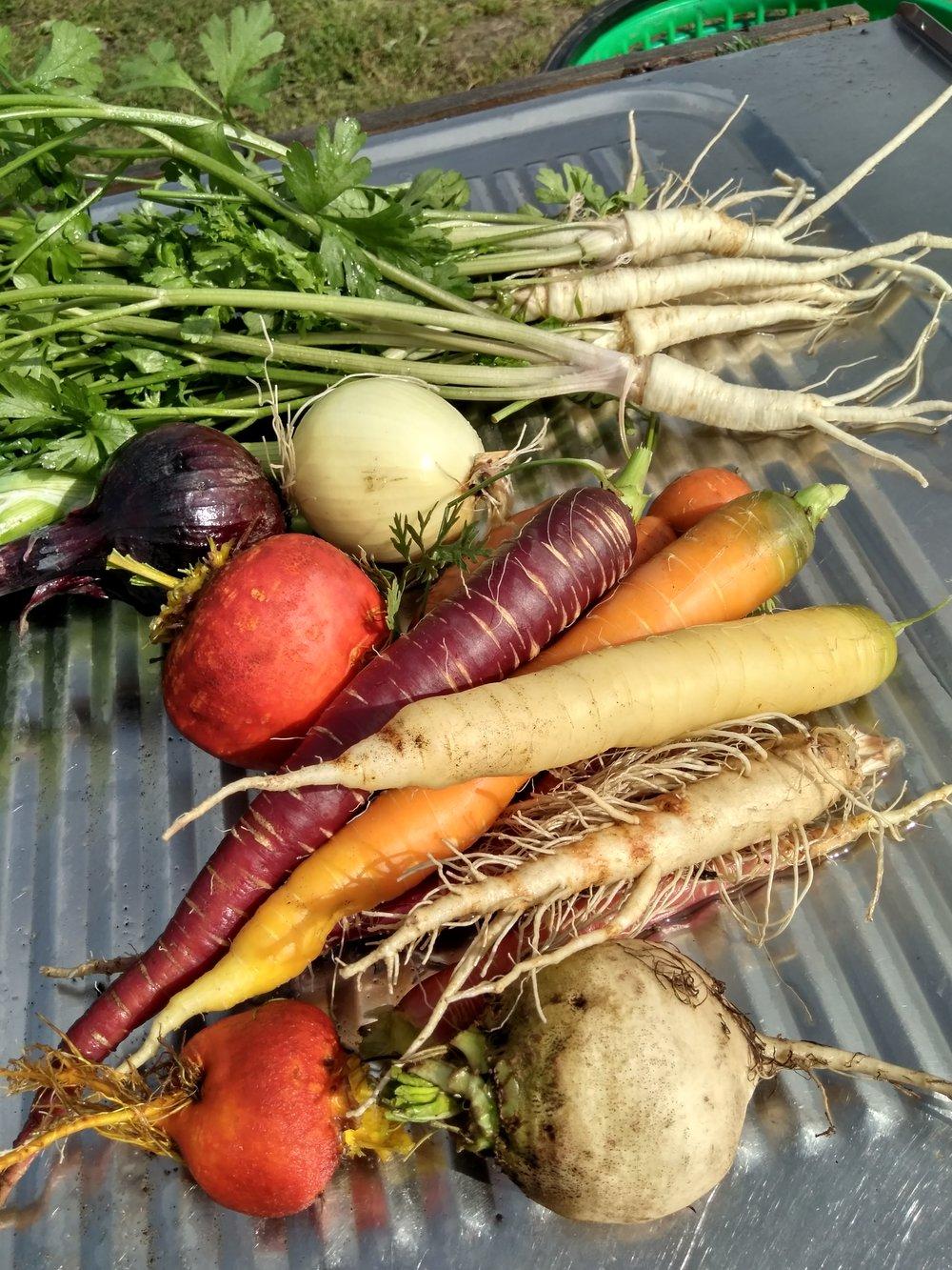 Et lite knippe av grønnsakene våre