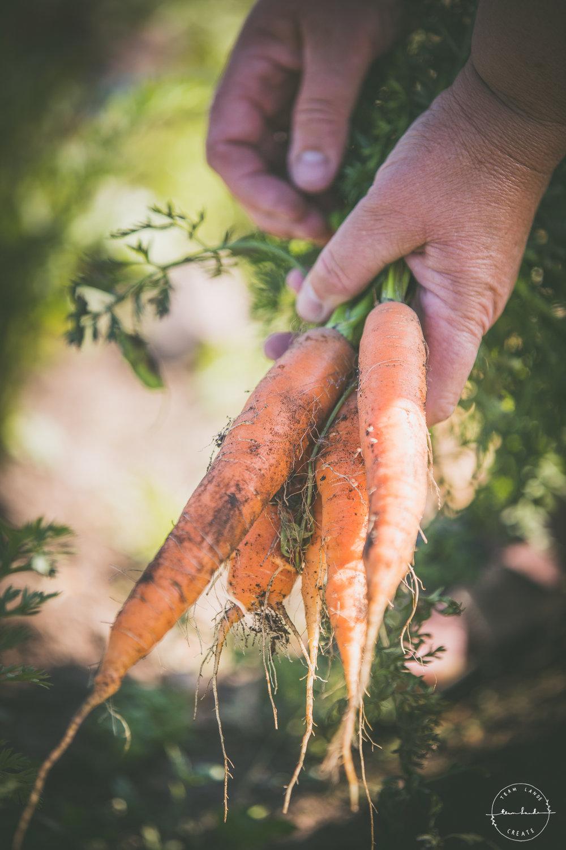 Hva slår ferske gulrøtter? Alle foto: Martin Fjeldly Lande