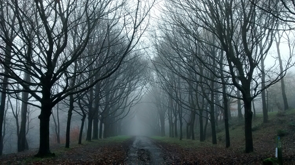 Just round the corner and the scene is very different. I like the austere formality of the trees fading into the misty distance.