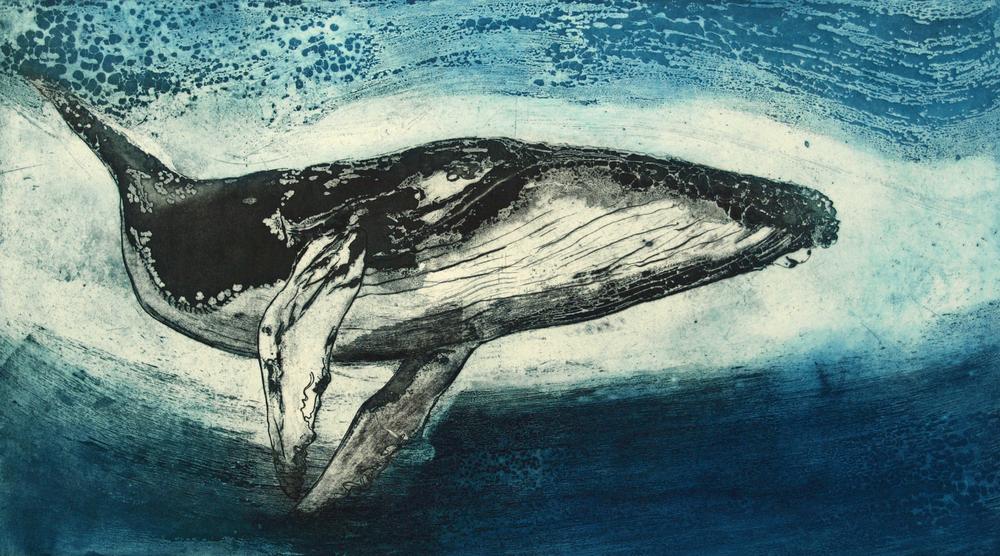 Humpback Whale IV   Etching 90 x 56cm  £ 880