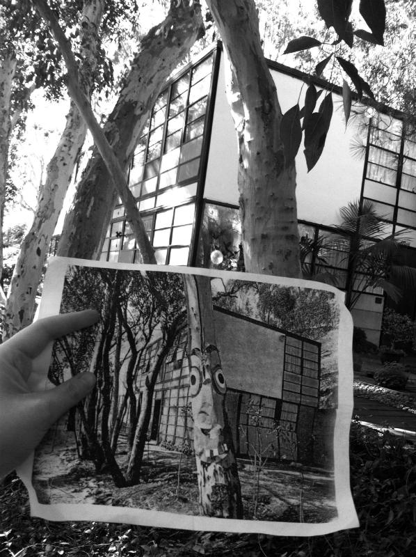 TreeFaceBW_5-w800-h800.jpg
