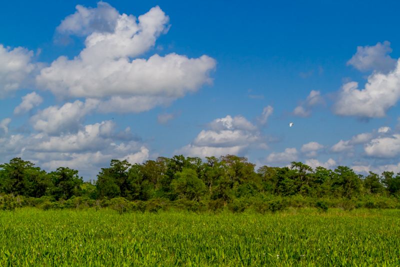 1803 MSY swamp-26.jpg