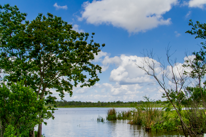1803 MSY swamp-14.jpg