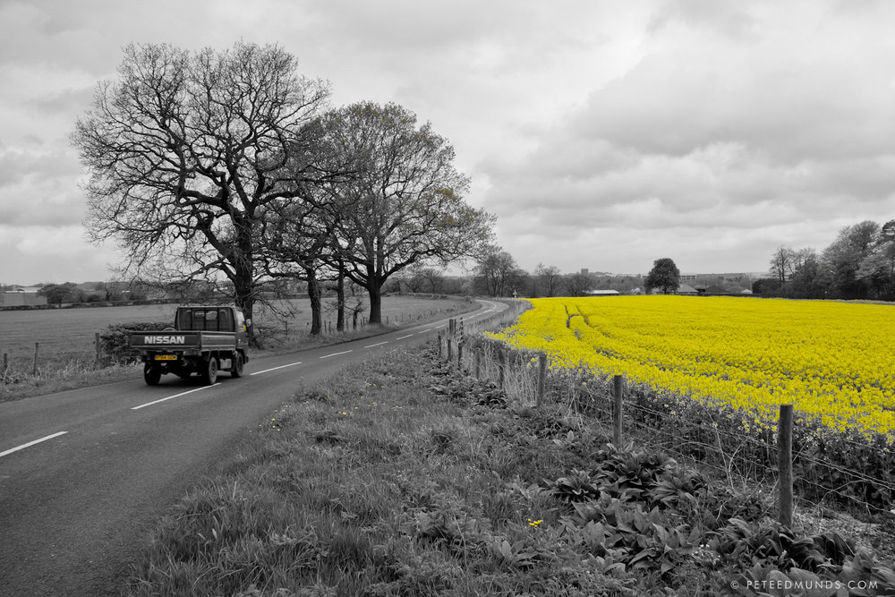 Cheshire - Rapeseed Field 01