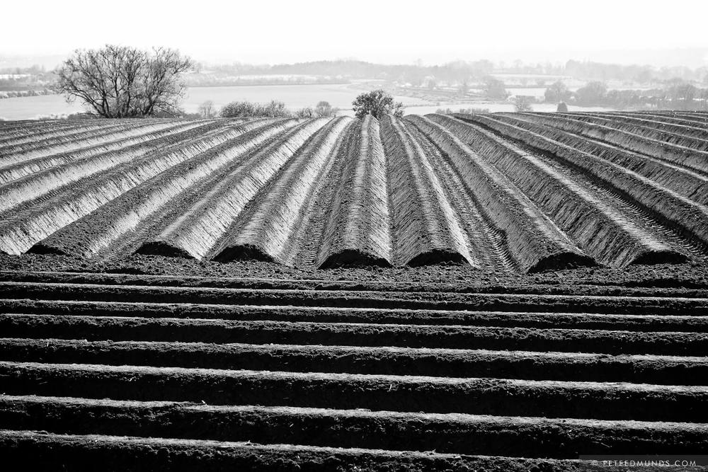 Ploughed Field (Northamptonshire)