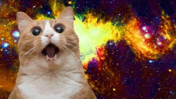 15-best-cat-memes-ever-meow--3283dd863e.jpg