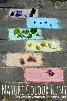 Side walk chalk and leaves and flowers, for color blocking.