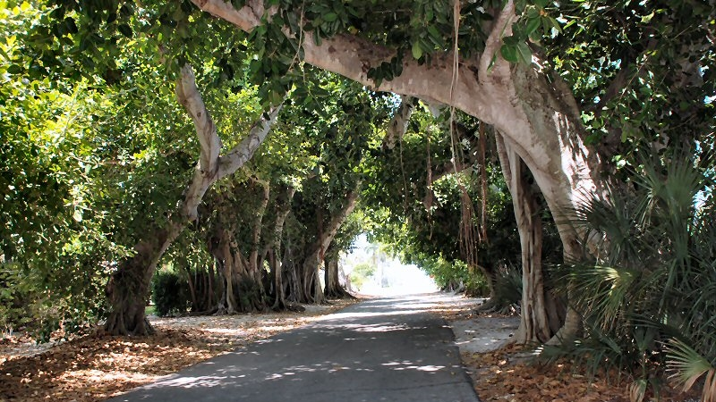 The best, most scenic roads in Palm Beach.