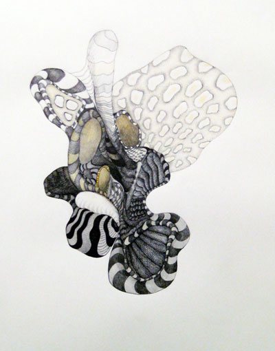 "Zebra Anemone  , 2009  ink on paper  34 1/4"" x 26 3/4"""