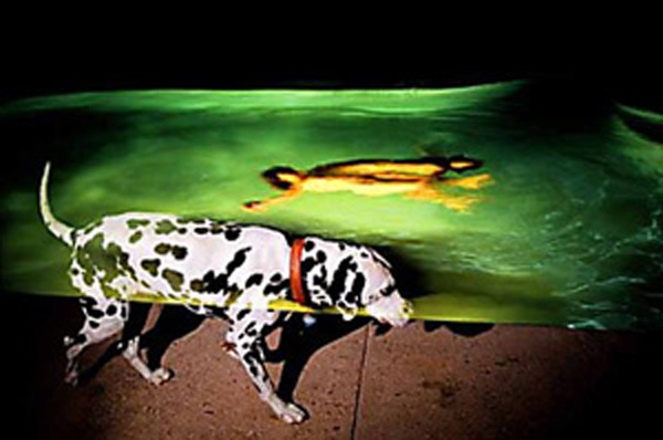 """Avery Danziger   (BIO) ,   Canine With Twins  , 2005, color photography 1/10, 41"""" x 61"""""""