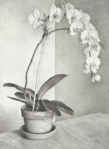 "Claudio Bravo, ""Orchid,"" 1994 lithograph, HC 5/6 ed. 75 33 3/4"" x 26"""