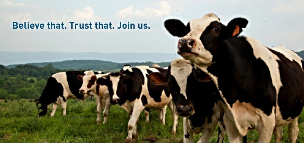 BannerA_Cows2.jpg