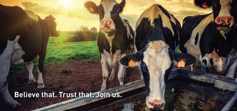 BannerA_Cows3b.jpg