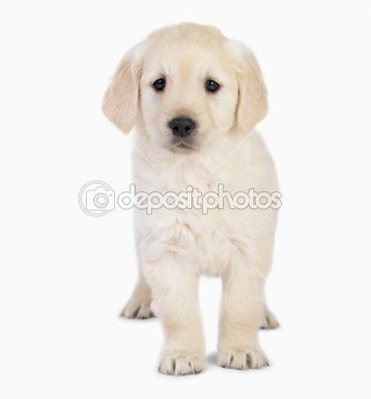 puppy_02.jpg