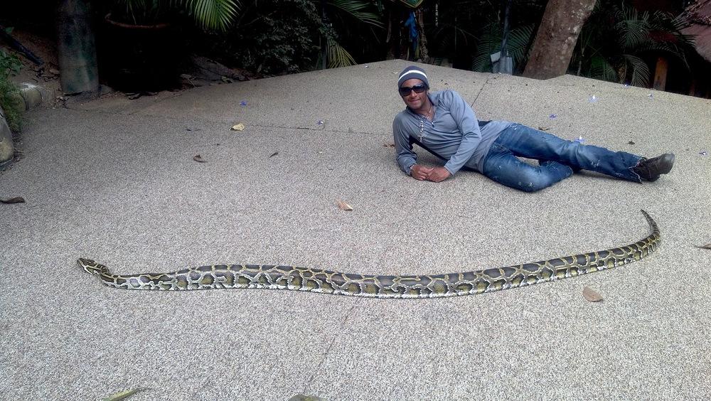 snake VA.jpg