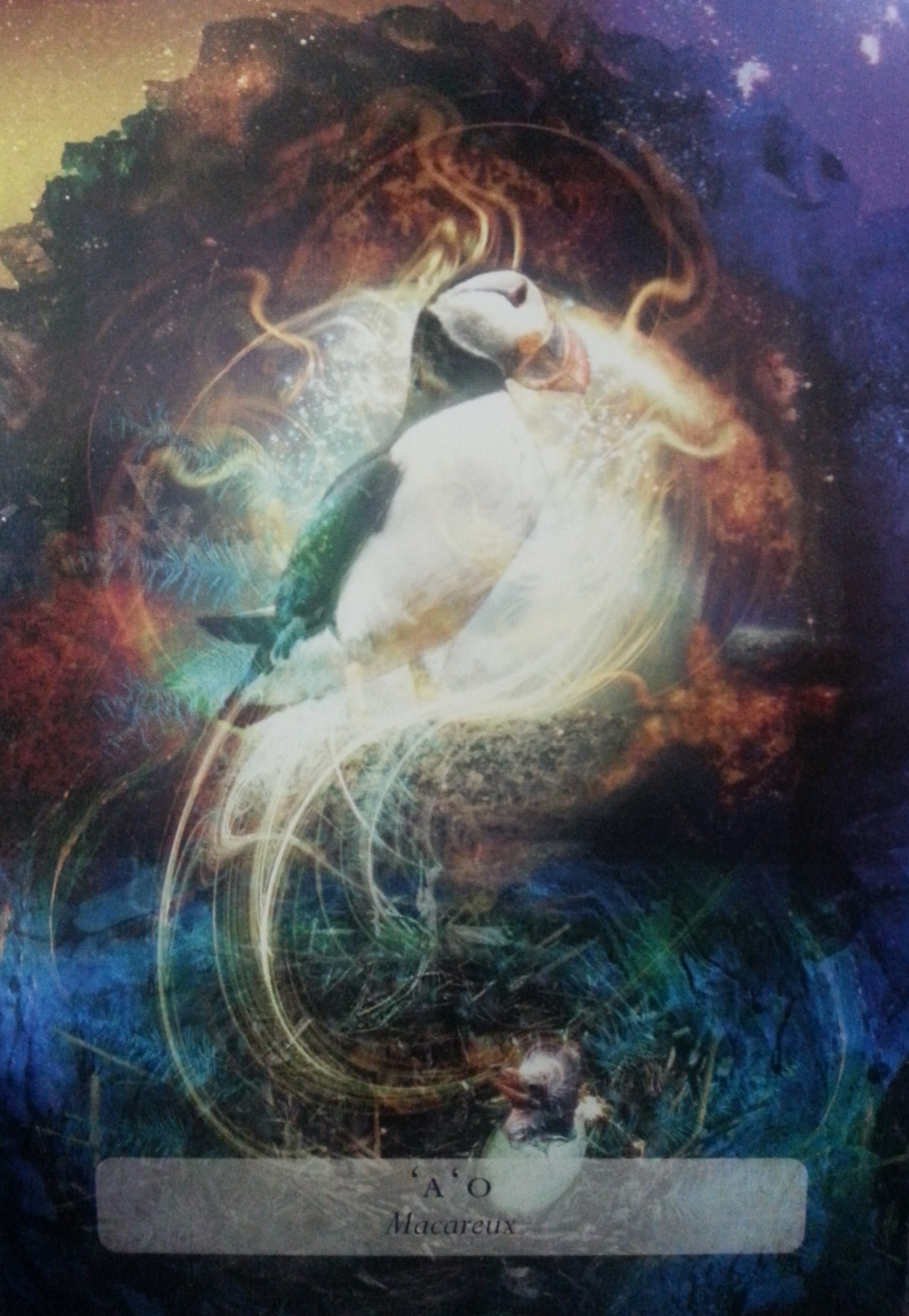 ODIN'S DAY JULY 29 TH 2015: THE SACRED PUFFIN HOLDS THE FLAME OF REBIRTH THROUGH TRANSFORMATION & JOY, LET YOUR HEART LEAD