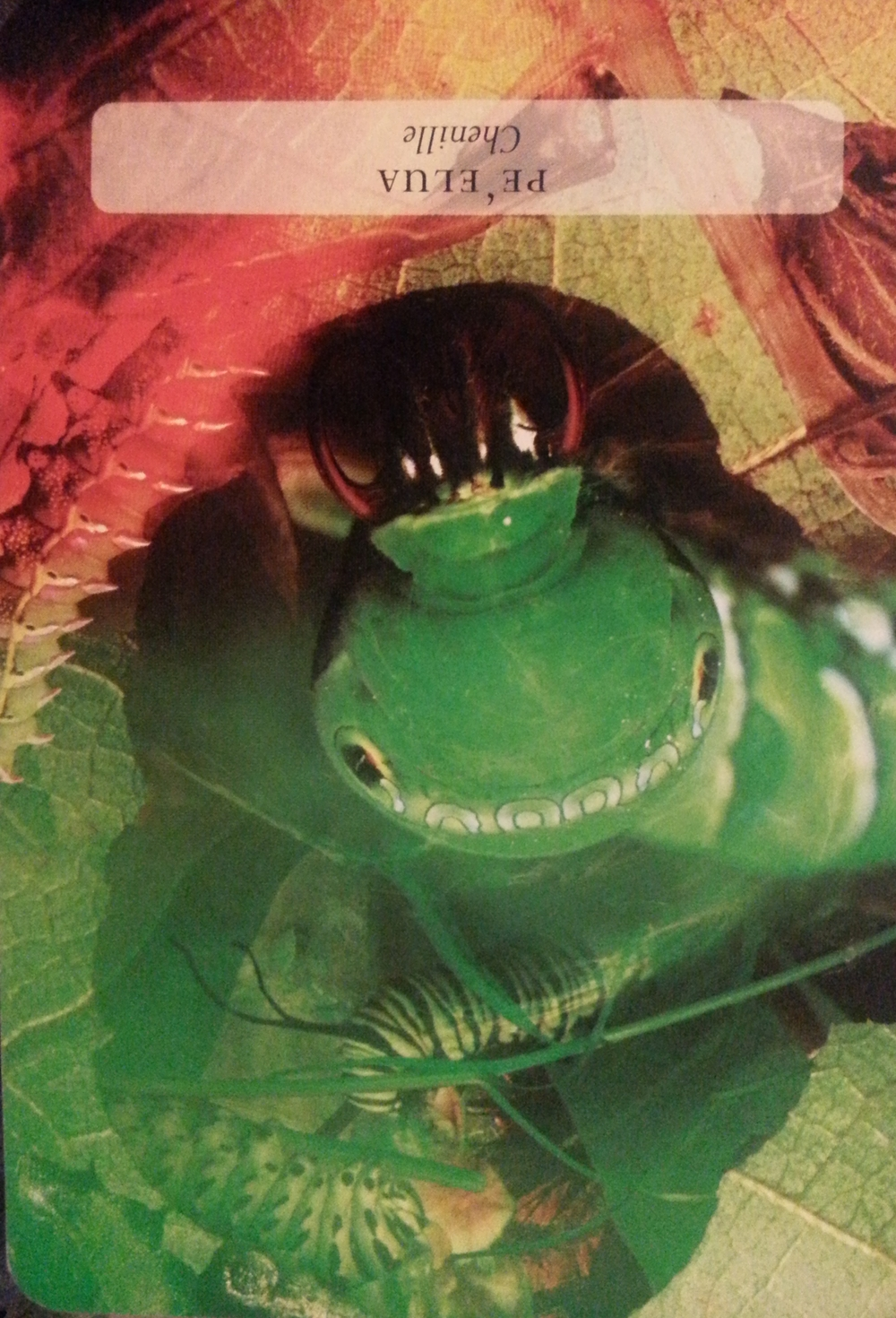 FREYA'S DAY JULY 31 ST 2015-PE'ELUA- THE SCARED CATERPILLARTEACHES US GIVE OURSELVESROOM TO GROW